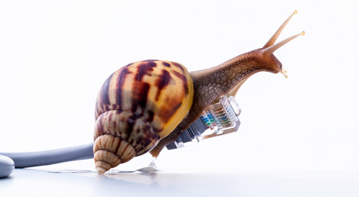 Snail on firbre optic cable: Speed up your internet load times